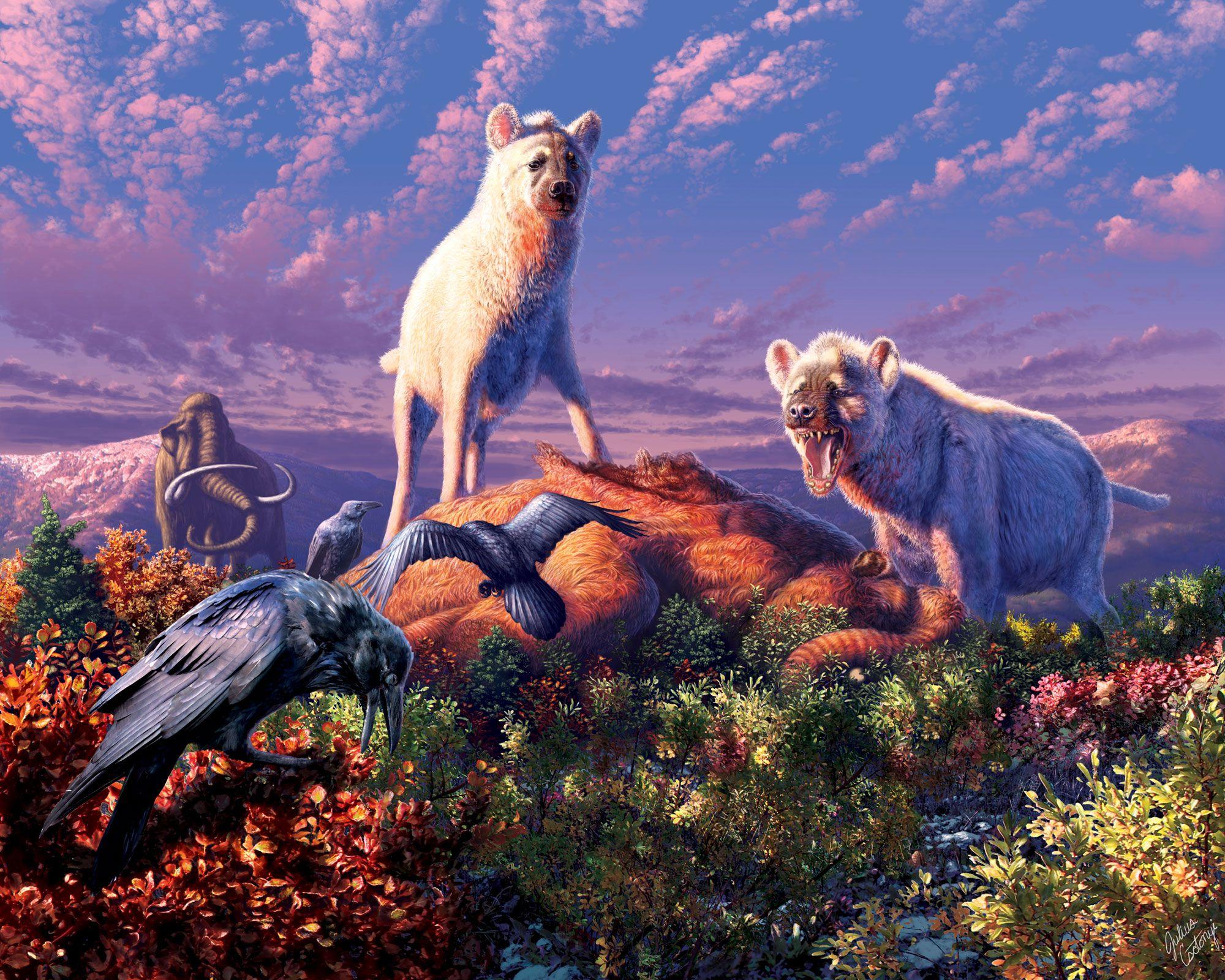 Des fossiles de hyènes ont été mis au jour en Arctique | National Geographic