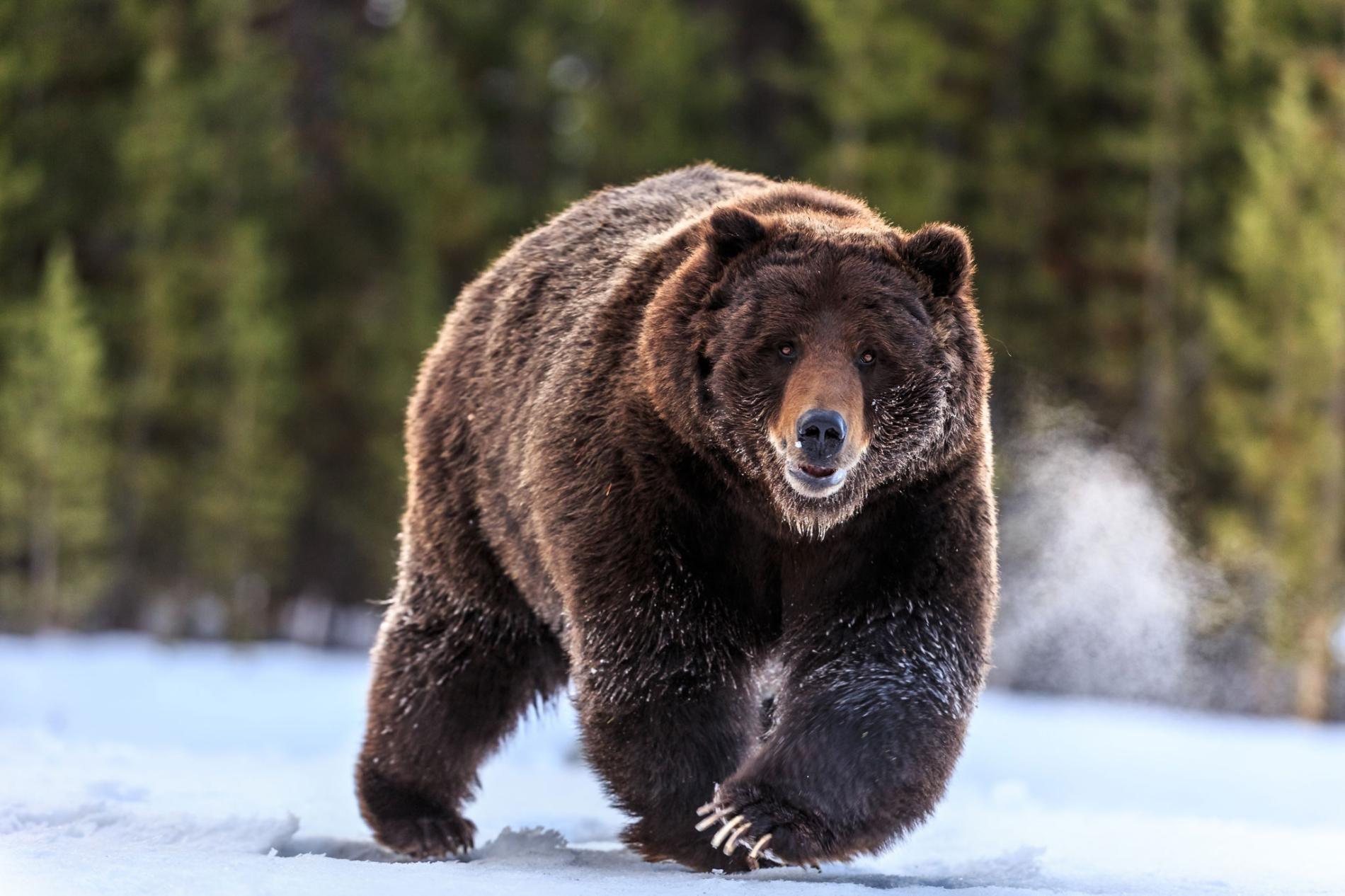 ours datant en ligne