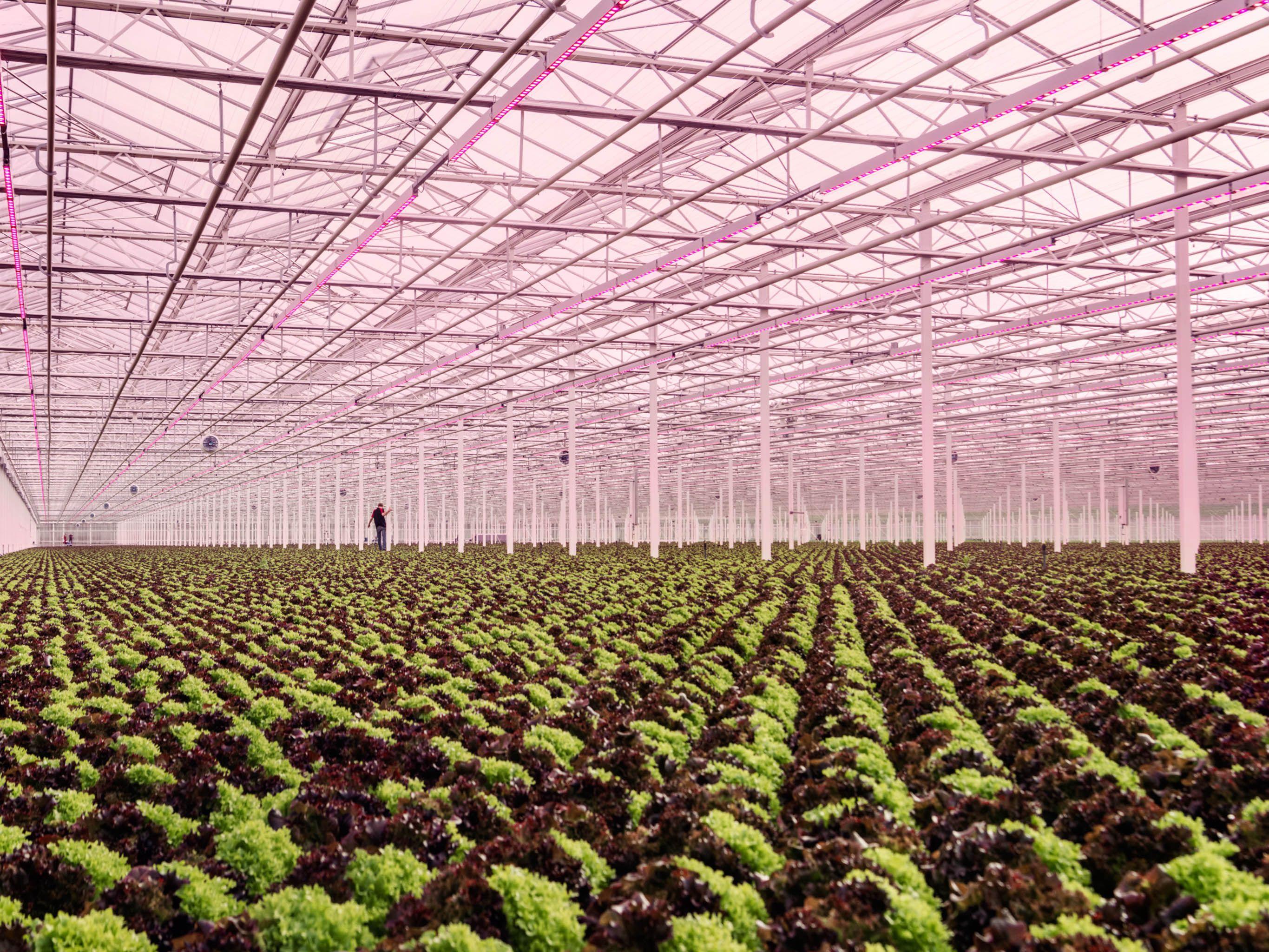 Que Planter En Octobre Sous Serre les pays-bas, centre de toutes les innovations agricoles