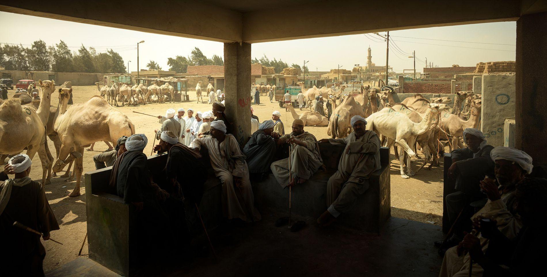 Marché aux chameaux, Birsqah, Égypte, 2018 - Jour après jour, plus de 6000 chameaux défilent en ...