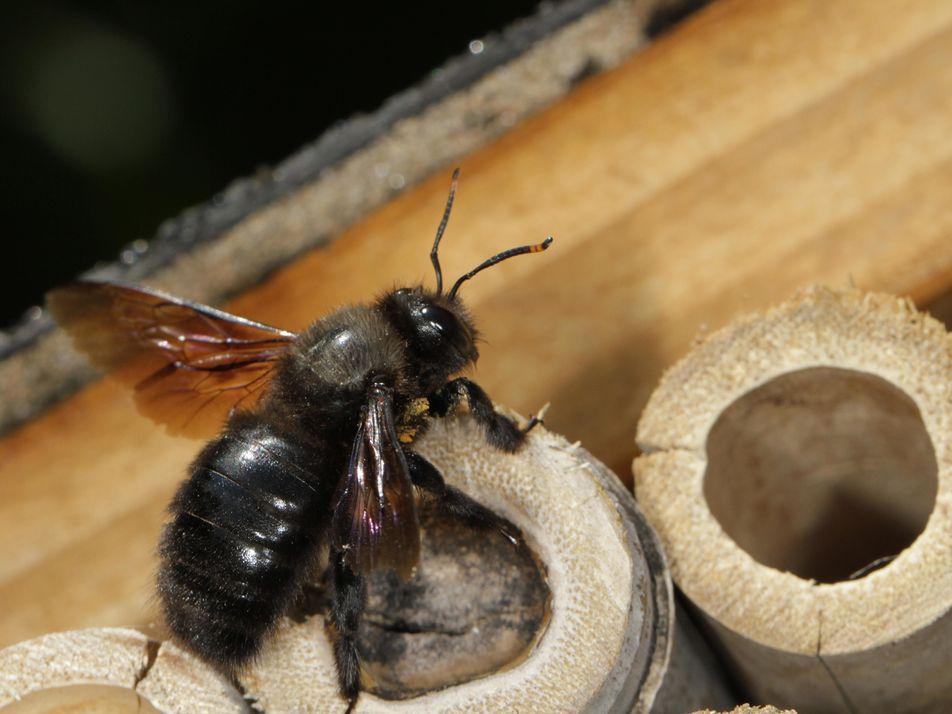 Des hôtels pour accueillir les insectes