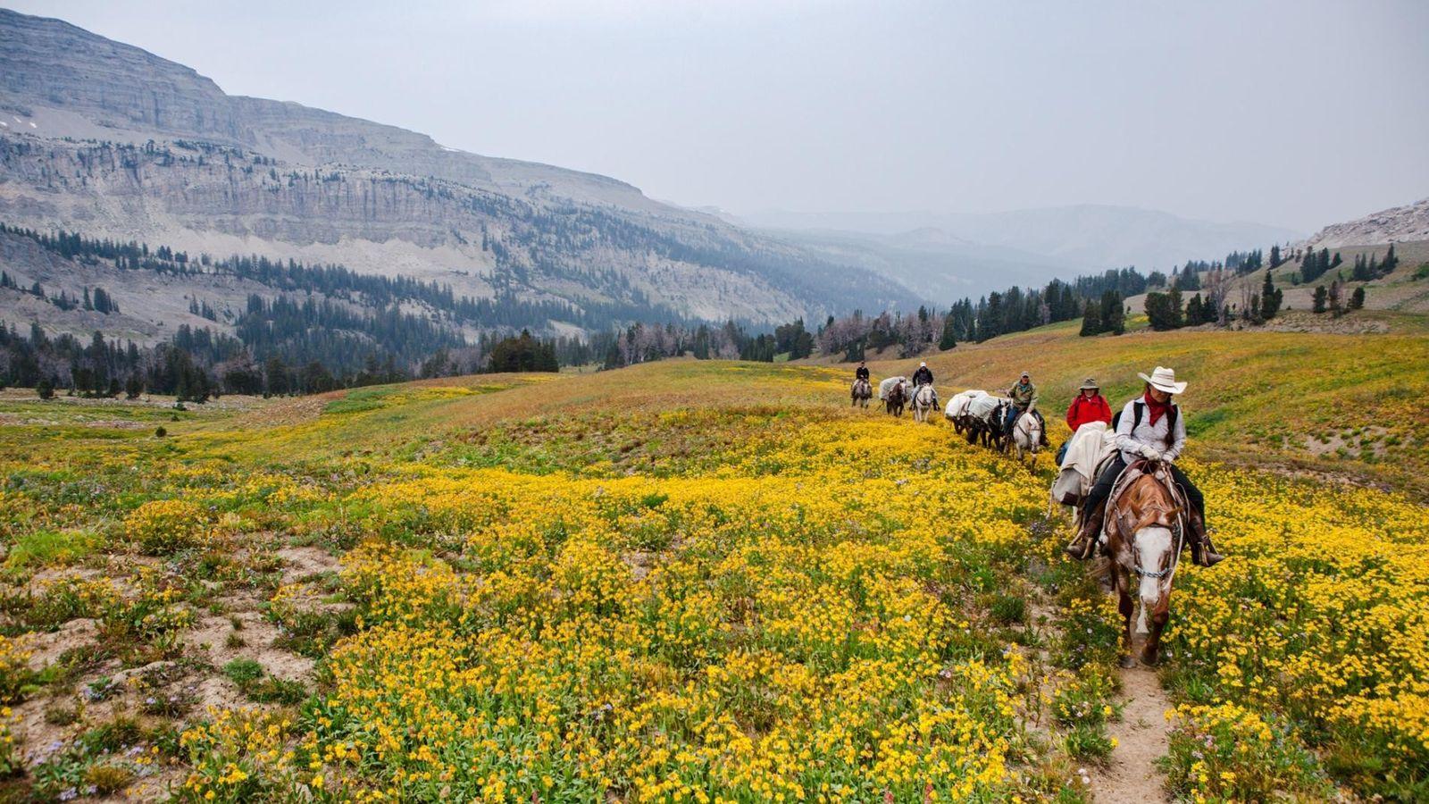 Cavaliers et chevaux se frayent un chemin à travers les champs de fleurs sauvages lors d'une ...
