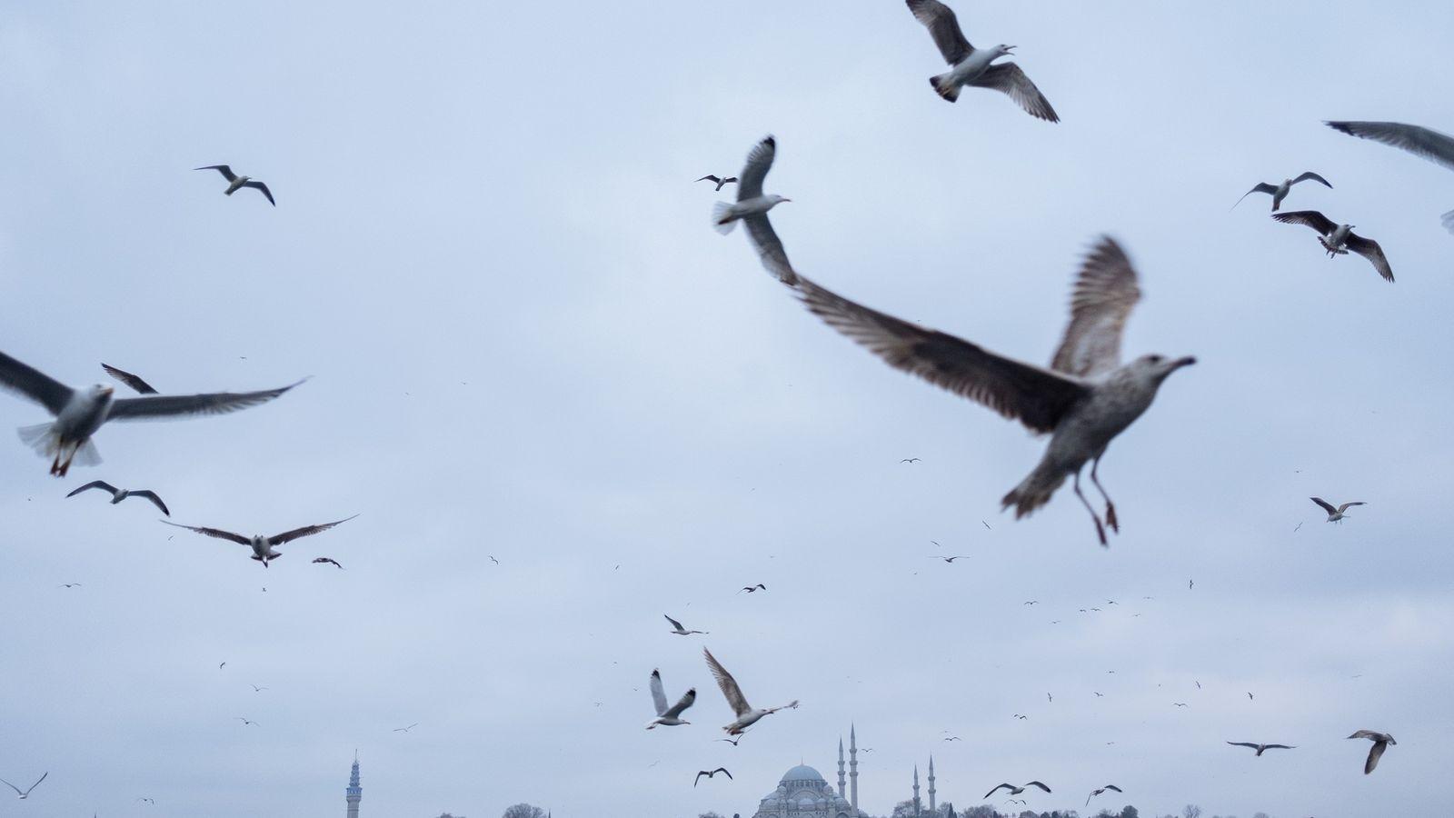 Des mouettes parcourent le ciel d'Istanbul, en Turquie.