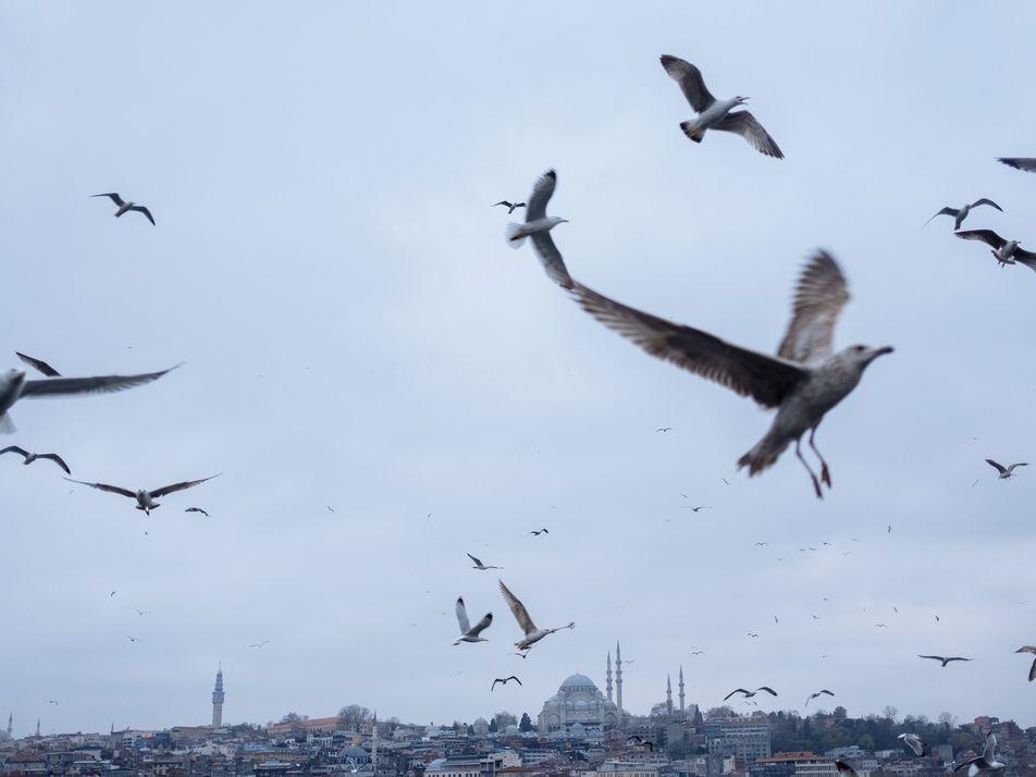 « Fantomatique et mélancolique » : Istanbul en quarantaine