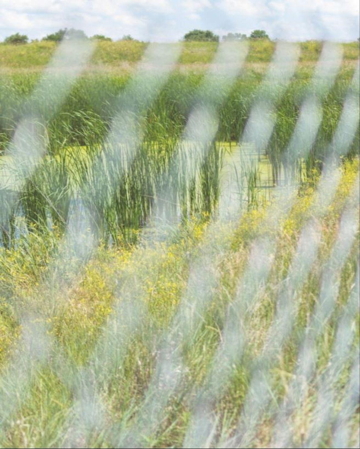 Derrière cette clôture s'étendent les marais salés de Marsh Wren, non loin de Lincoln, dans le ...
