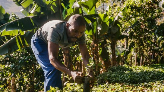 Zachariah Mukwinya, un agriculteur du village de Chavhanga dans le district de Mutasa, a directement bénéficié ...