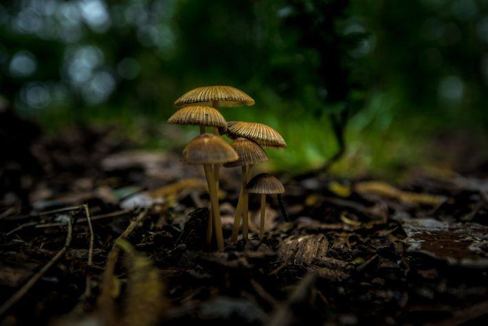 Tiny Forest mushrooms