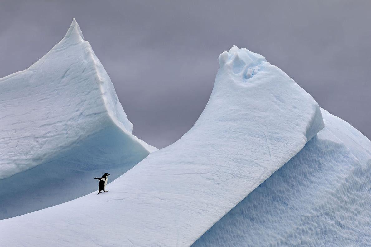 « Je naviguais le long de la péninsule de l'Antarctique à bord d'un zodiaque lorsque nous ...