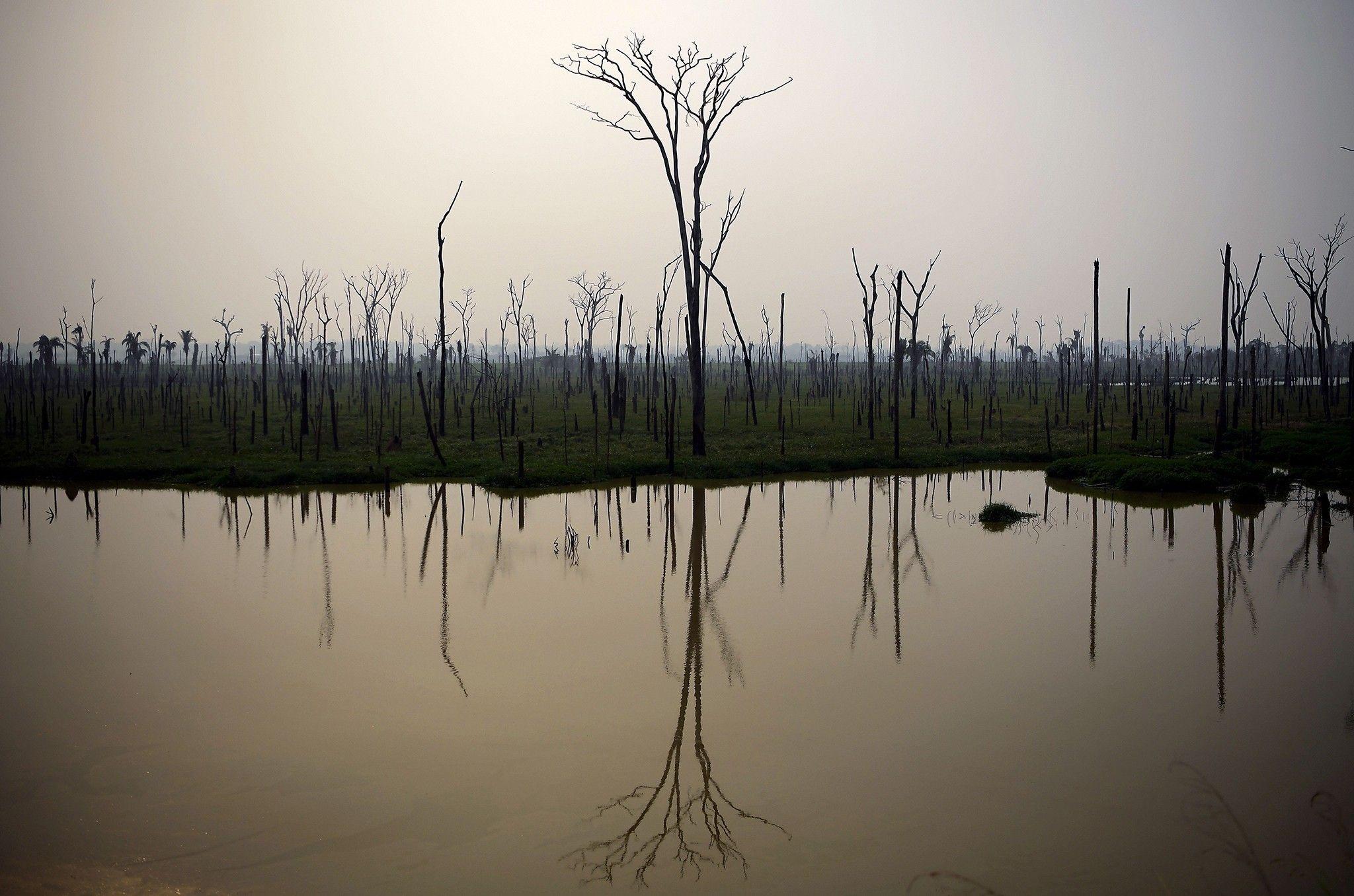 En Amazonie, les feux menacent des centaines d'espèces de poissons | National Geographic