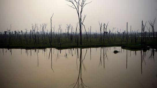 Au Brésil, comme le rappelle cette photo d'une forêt calcinée, la forêt pluviale amazonienne est toujours ...