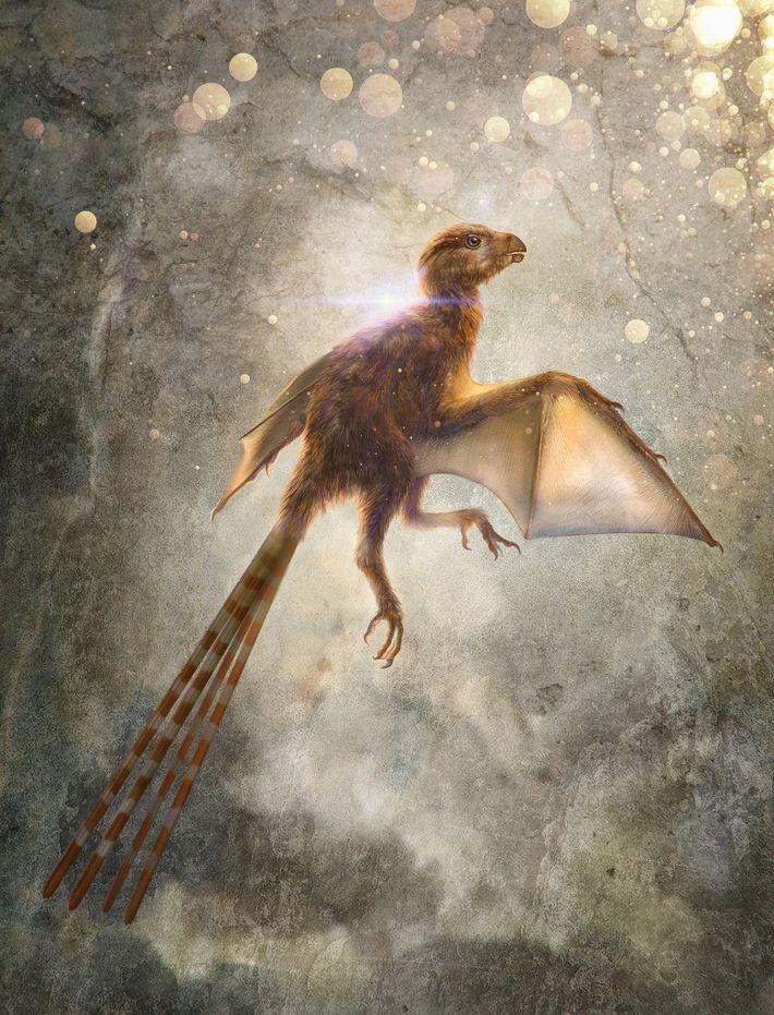 Cette illustration représente Ambopteryx longibrachium, une nouvelle espèce de dinosaure non-avien théropode qui possédait des ailes ...