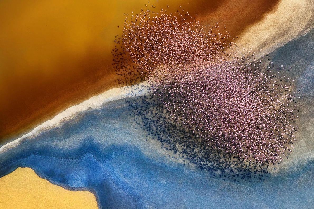 Une nuée de flamants roses survole le Lac Natron, en Tanzanie.