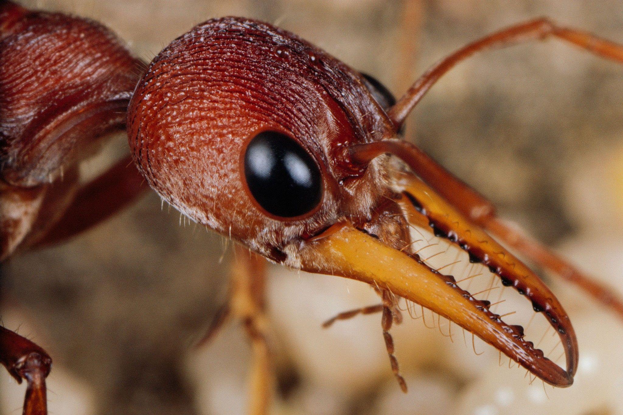 Grosses Fourmis Noires Dans Le Jardin ces insectes aussi enterrent leurs morts | national geographic