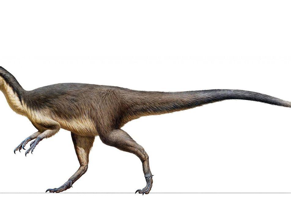 Découverte : des plumes recouvraient des dinosaures des régions polaires