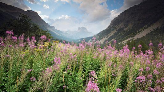 L'équilibre de la nature, une fable millénaire et naïve