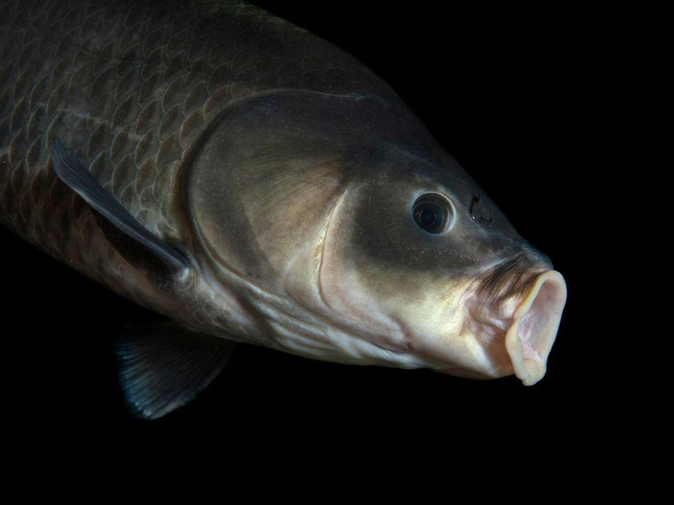 Ce poisson de 112 ans bat tous les records de longévité