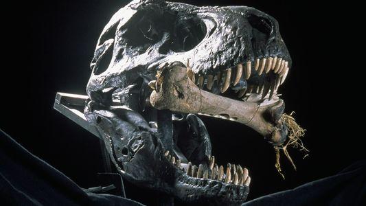 Le 21e siècle, nouvel âge d'or des dinosaures