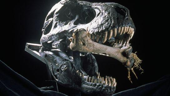 Dans son nouveau livre The Rise And Fall Of The Dinosaurs, Stephen Brusatte considère que le ...
