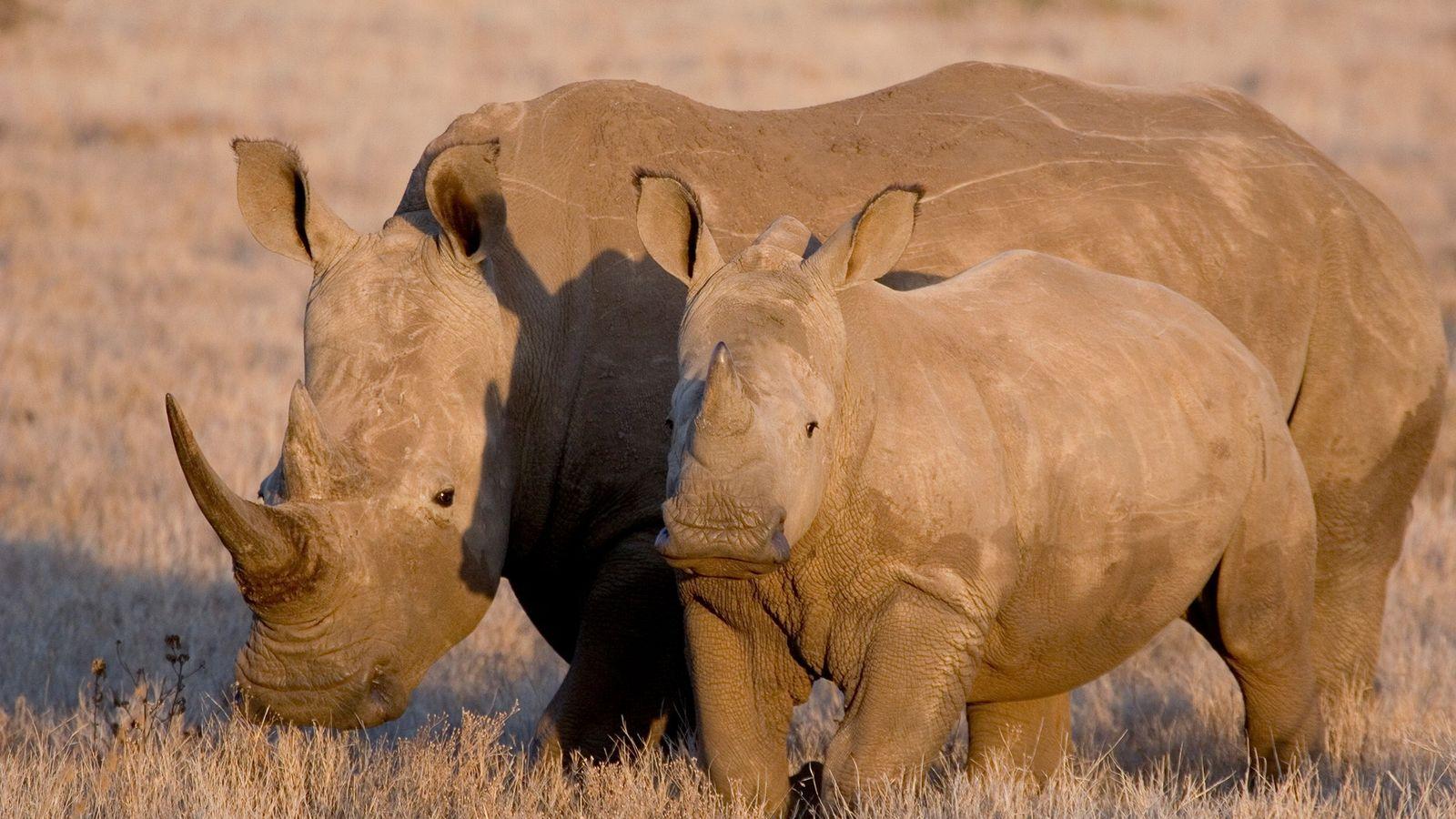 Boonchai Bach, baron présumé d'une organisation impliquée dans le trafic d'animaux sauvages, était accusé d'avoir notamment ...