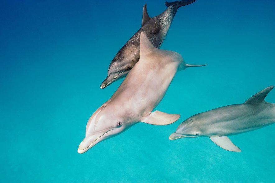 Vidéo : Ces dauphins éjectent des poissons hors de l'eau pour les assommer et s'en nourrir