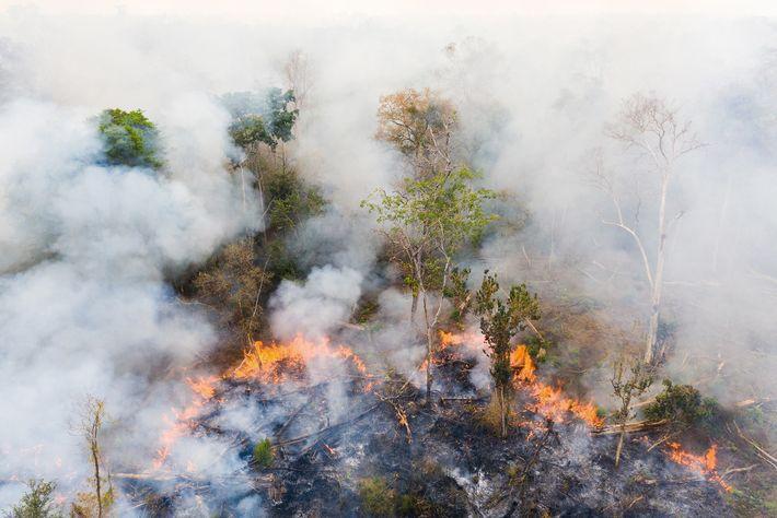 Près du sanctuaire de Phnom Tnout Phnom Pok, au nord du Cambodge, les terres sont brûlées ...