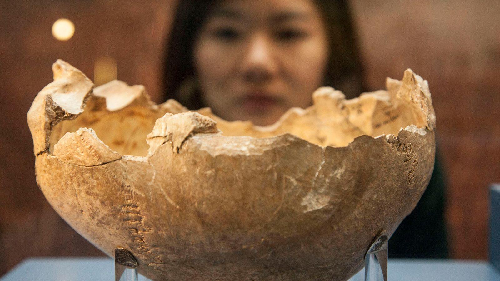 Cette coupe faite à partir d'un crâne humain a été trouvée sur un site archéologique en ...
