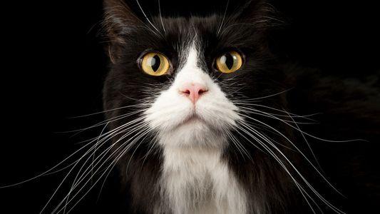 """""""Pour un chat, vivre dans une famille nombreuse relève presque de la maltraitance"""""""
