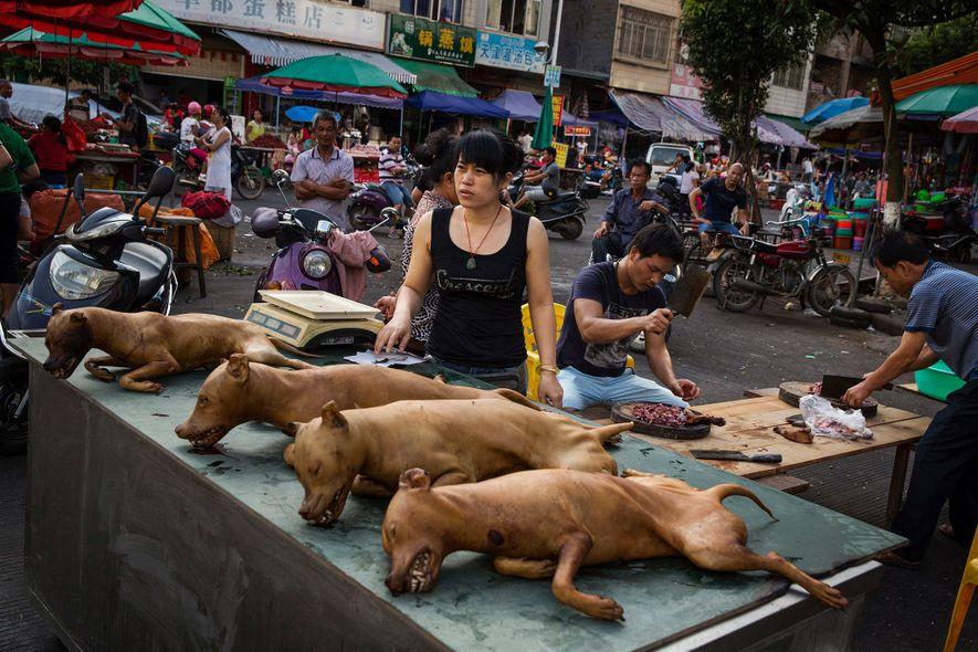 Bien que la viande de chien ait longtemps été mangée en Chine, cette pratique est devenue ...