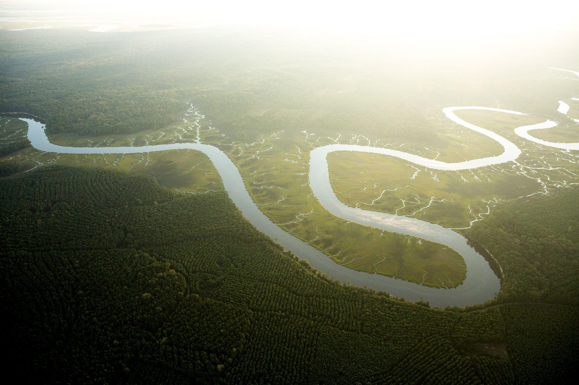 Les effets combinés de l'augmentation des niveaux de CO2 et des températures amplifieront la consommation d'eau par les végétaux, ce qui mènera à une baisse des niveaux d'eau dans les fleuves et rivières comme c'est le cas pour du fleuve Ashepoo en Caroline du Sud ici photographié.