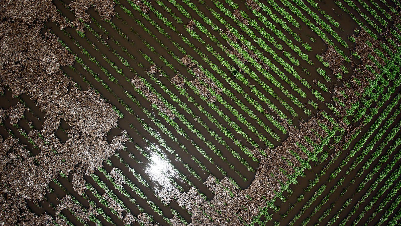 Les plants de soja sont entourés par les eaux suite aux inondations survenues près de Wyanet, ...