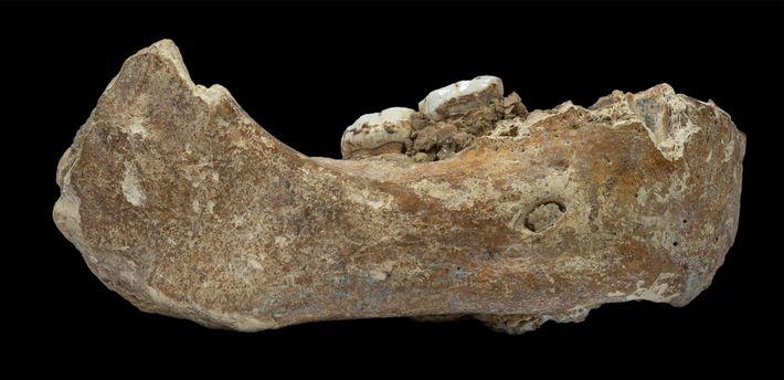 Le fragment de mâchoire récemment décrit et baptisé mandibule de Xiahe en référence au district chinois ...