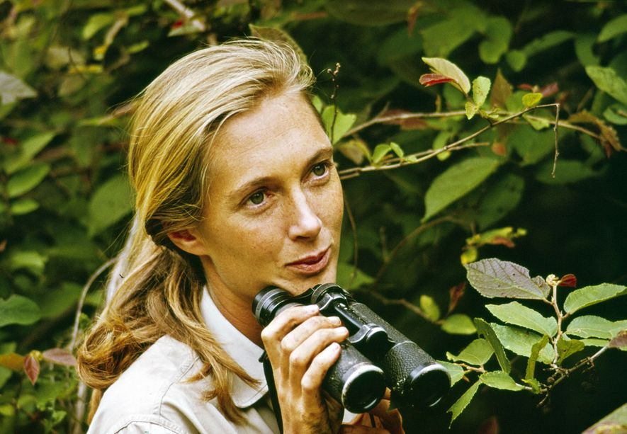 L'émission spéciale sur Jane Goodall intitulée « Miss Goodall and the World of Chimpanzees » a ...