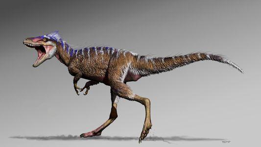Le fossile d'un ancêtre du Tyrannosaurus rex mis au jour dans l'Utah