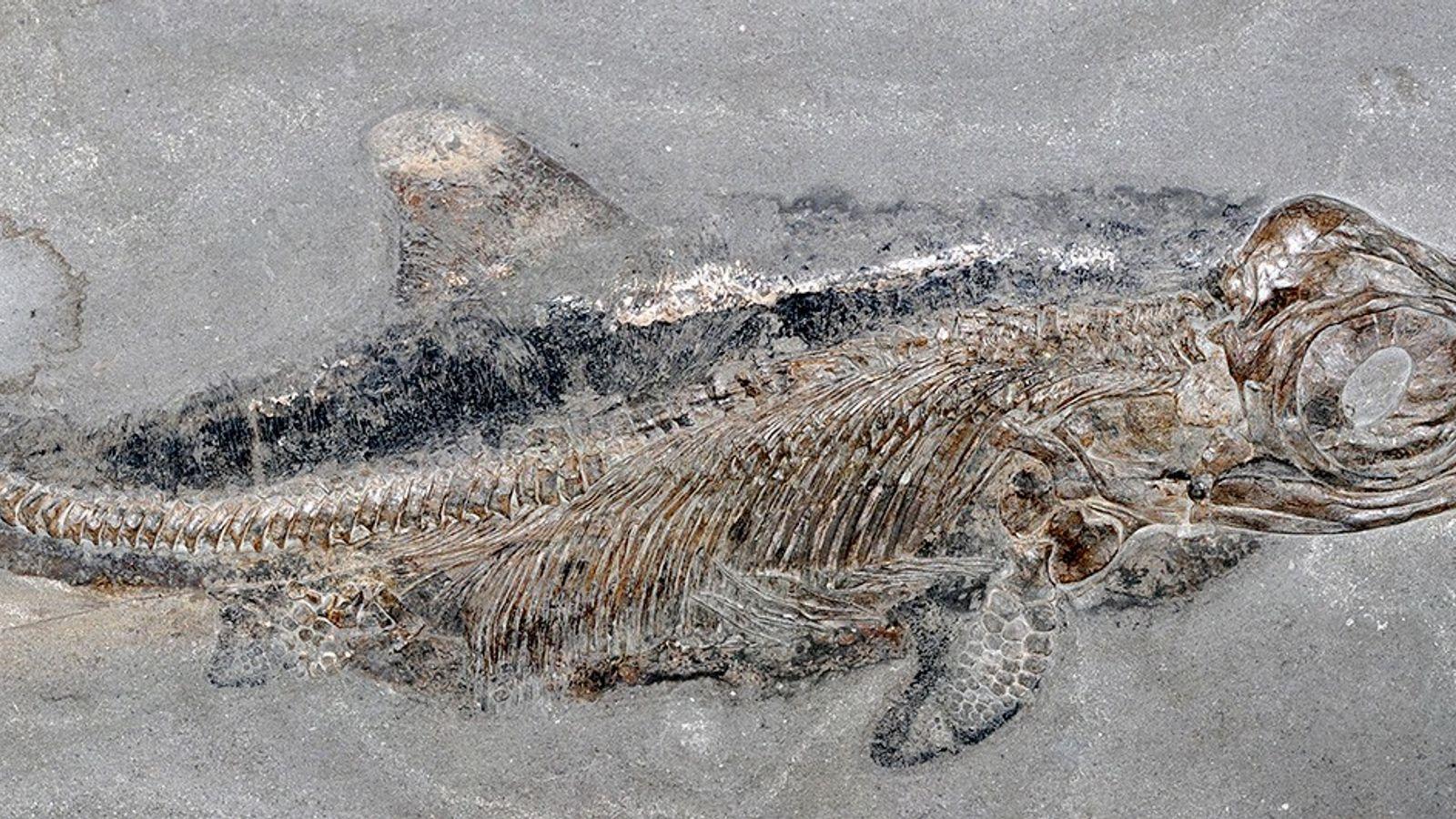 De nombreux fossiles d'animaux marins vieux de 180 millions d'années, dont ceux de milliers d'ichtyosaures, des ...