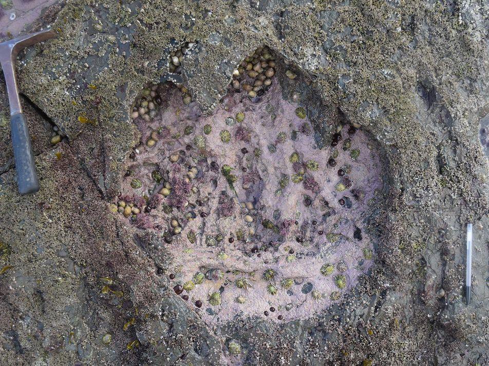 Découverte d'empreintes de dinosaures géants en Écosse