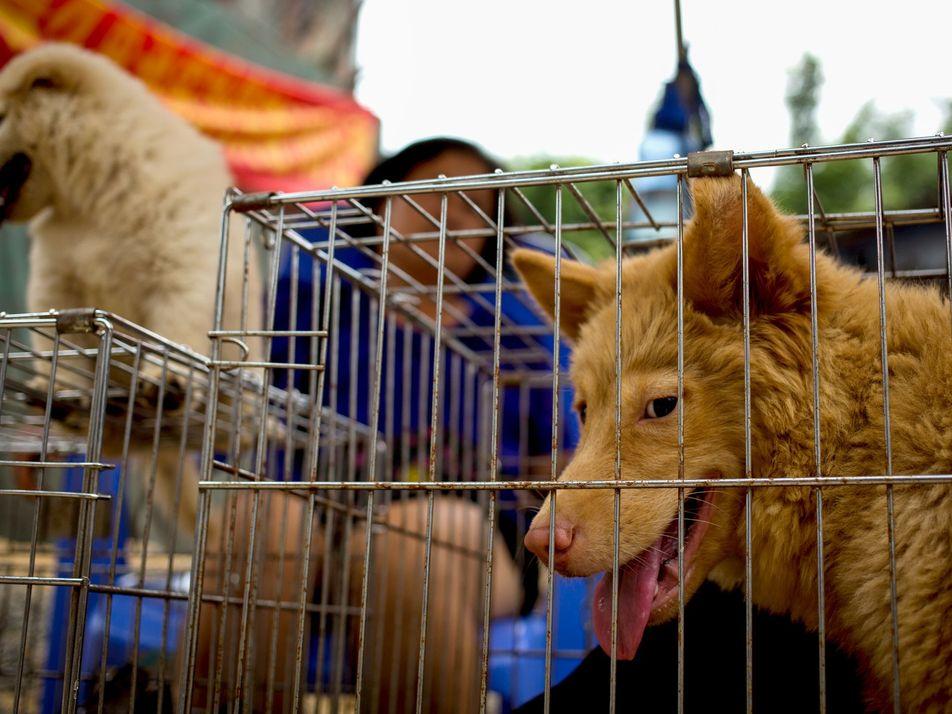 Taïwan interdit la consommation de chien : une première en Asie