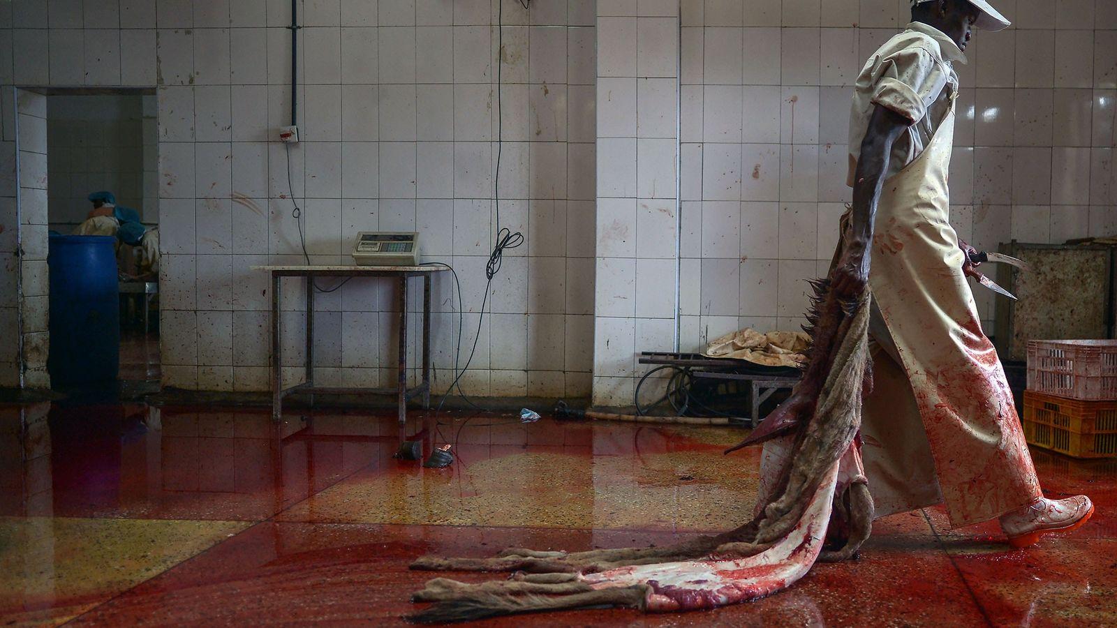 Destinées à la fabrication d'un remède traditionnel, les peaux d'ânes sont très prisées en Chine. Alors ...