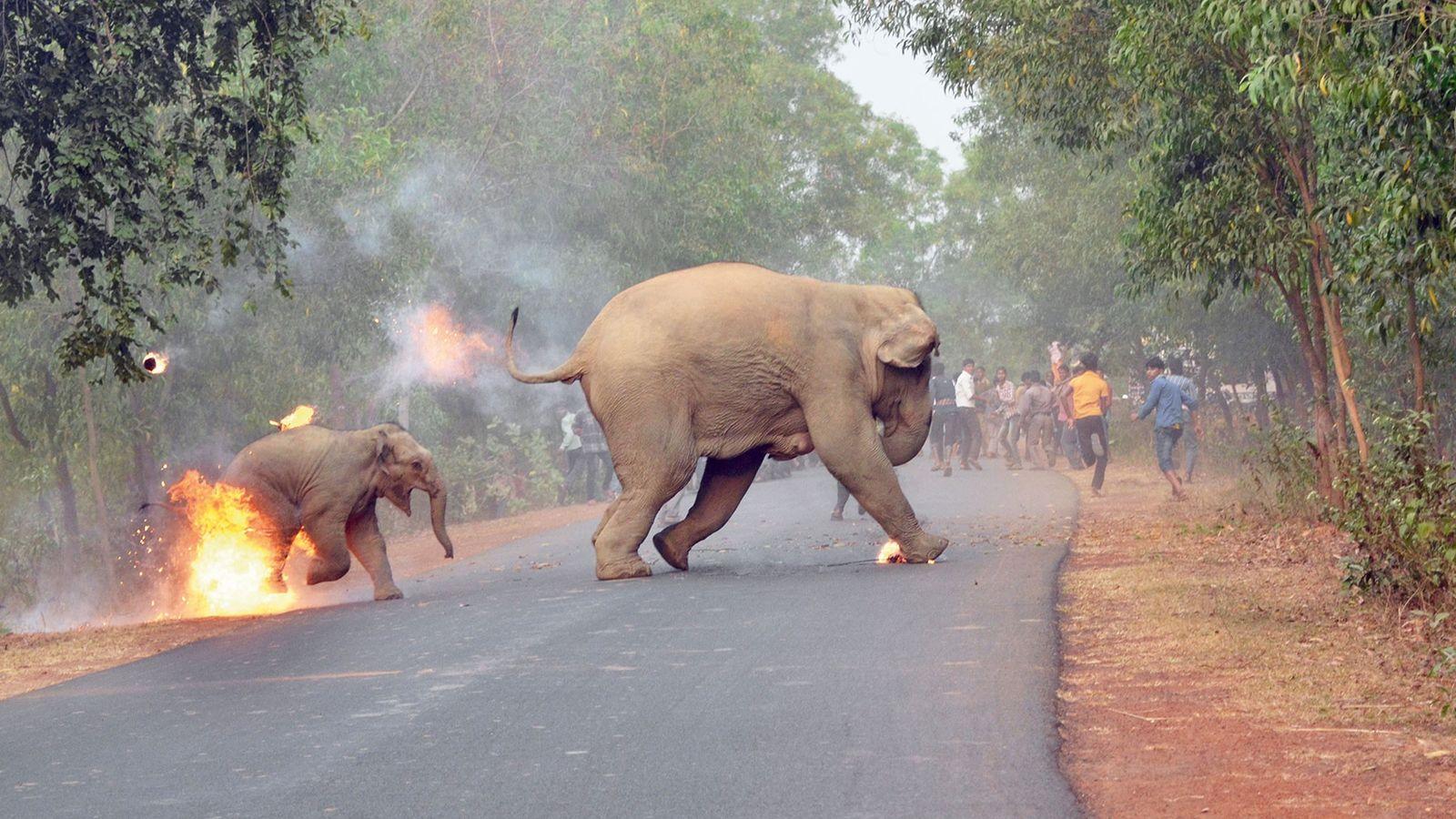 Un éléphanteau d'Asie et sa mère fuient une foule de gens qui leur lancent des boules ...