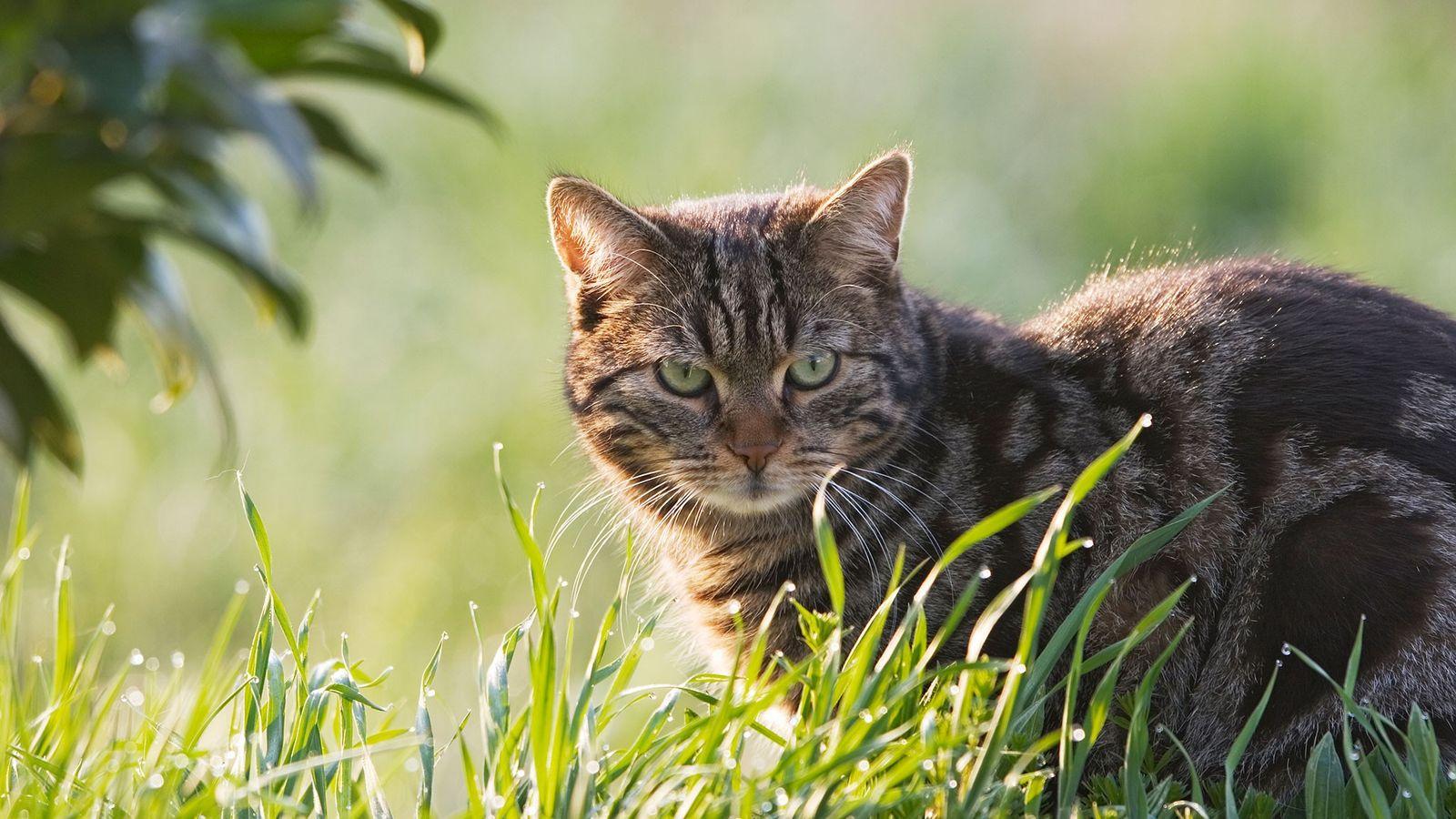 Les chats sont peut-être mignons, mais une nouvelle étude révèle que leur instinct de chasse aurait ...