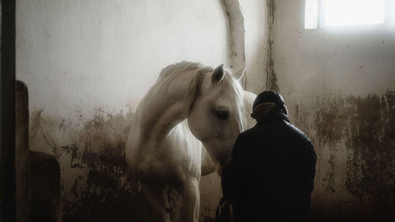 Un homme s'occupe de l'un de ses chevaux suite à son dressage au haras de Konstantin ...