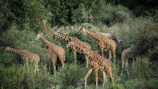 Comment sauver le plus grand animal du monde ?