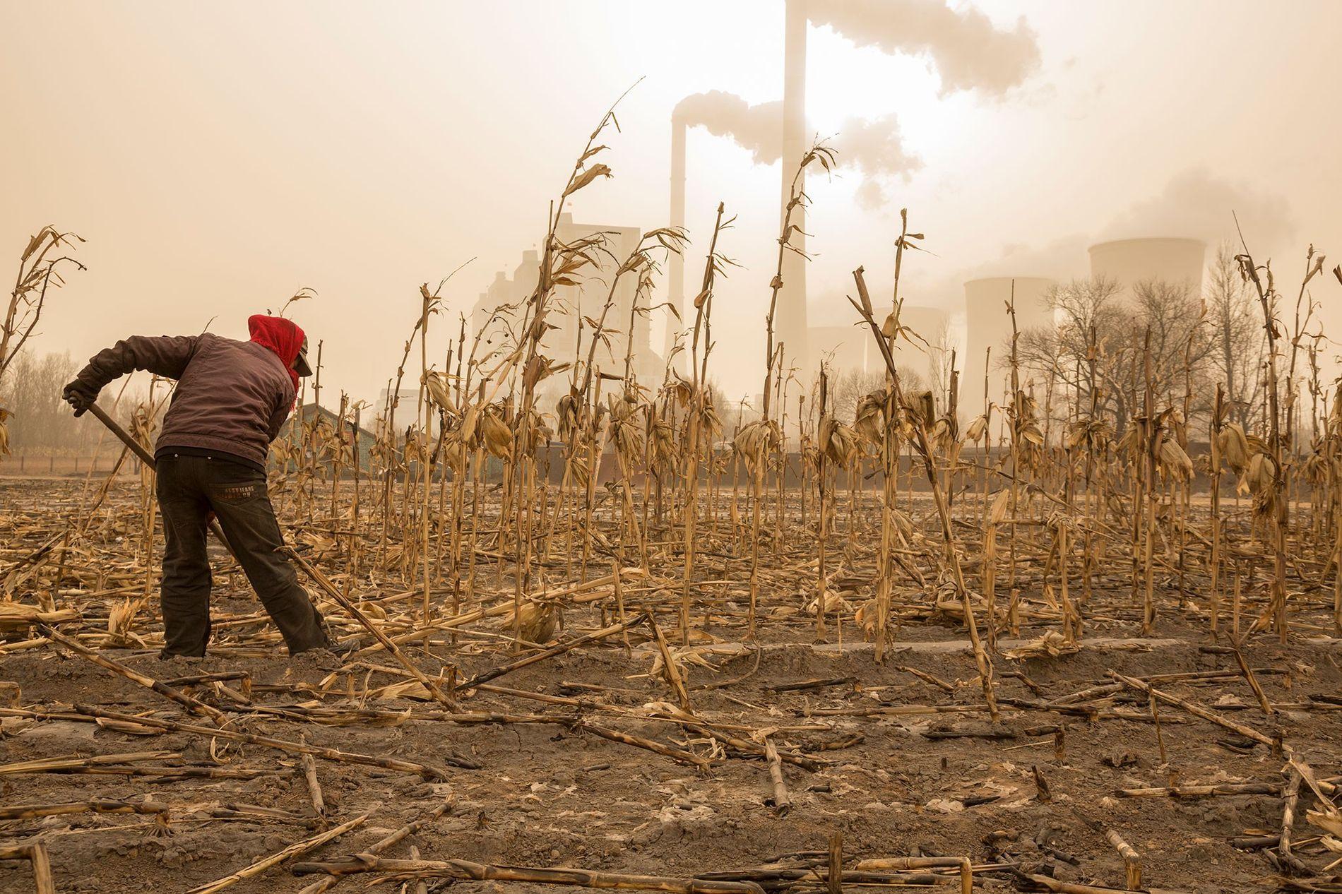 Un fermier attend le printemps près d'une centrale nucléaire dans la province de Shanxi, en Chine. Le complexe nucléaire produit l'électricité pour Pékin, situé à environ 320 kilomètres de là, et recouvre les champs, les récoltes et les riverains d'un épais manteau de suie.