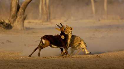 Découvrez les animaux qui peuplent les prairies de la planète