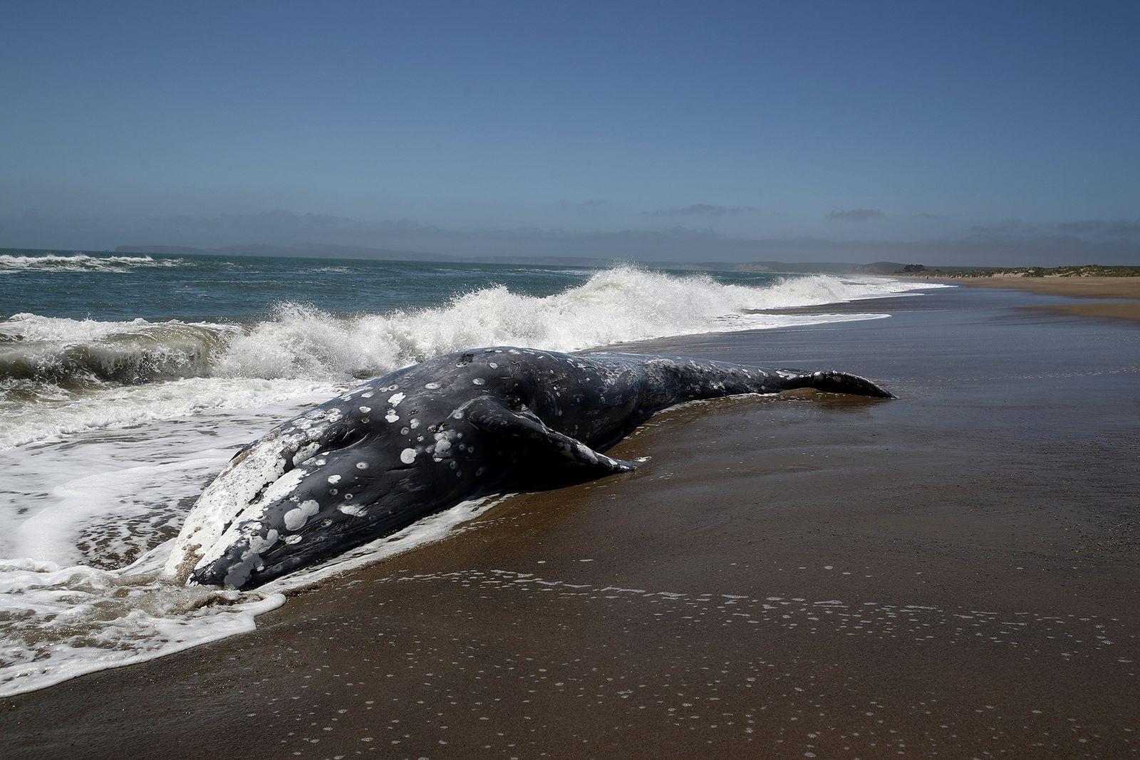 Les tempêtes solaires seraient-elles responsables de l'échouage des baleines ?