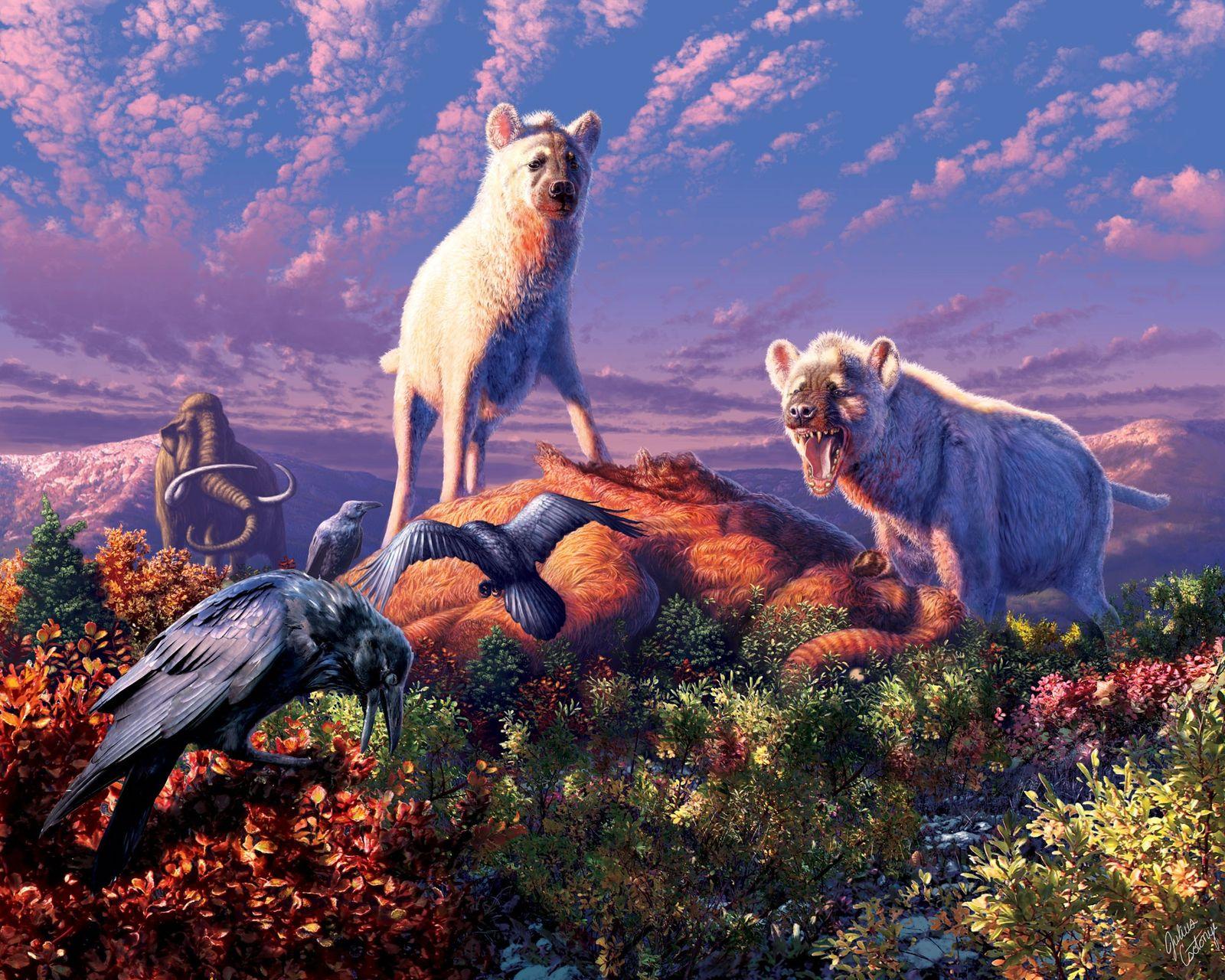 Des fossiles de hyène appartenant au genre éteint Chasmaporthetes (illustré ci-dessus) ont été découverts pour la ...