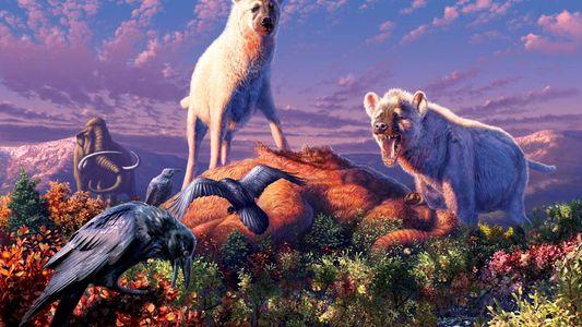 Des fossiles de hyènes ont été mis au jour en Arctique