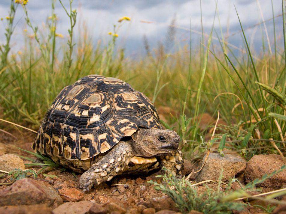 Des milliers d'animaux sauvages sauvés dans un coup de filet international