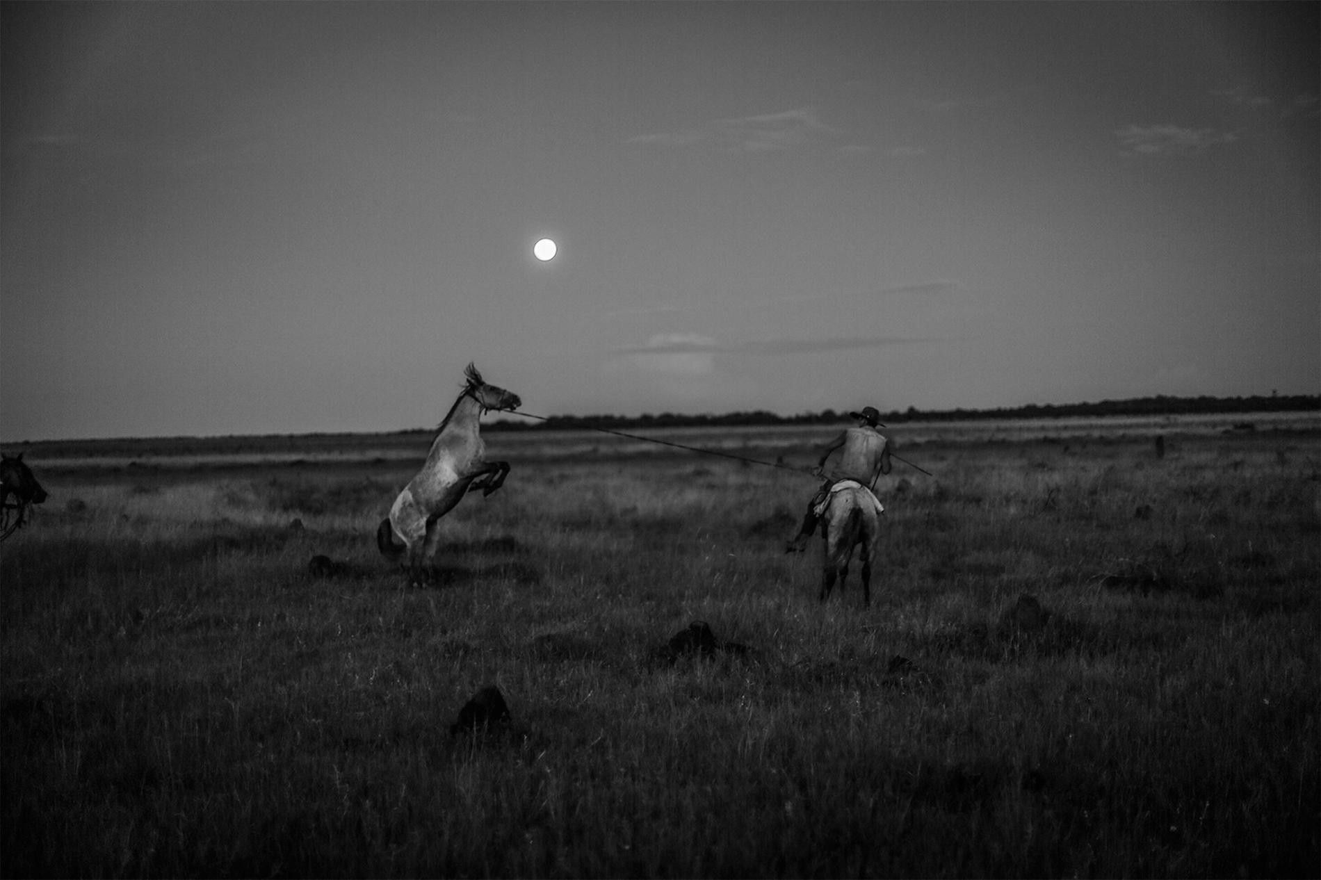 Un llanero apprivoise un cheval sauvage du Casanare, en Colombie.