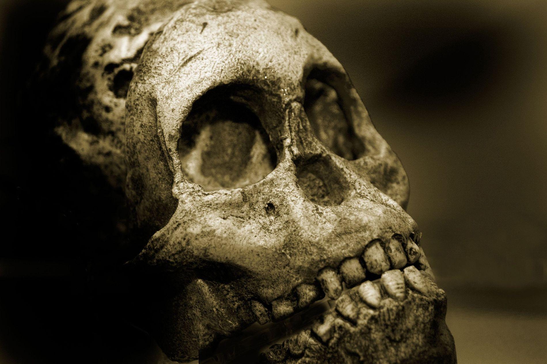 L'usure dentaire due à la mastication des aliments a pendant longtemps été à l'origine de l'alignement ...