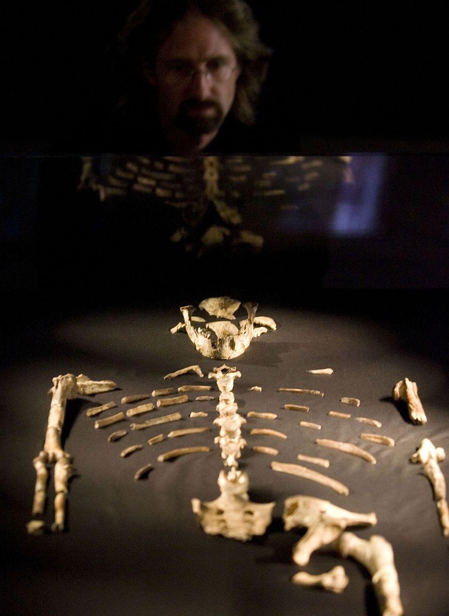 Un visiteur observe les restes de Lucy, un hominidé qui a vécu il y a 3,2 ...